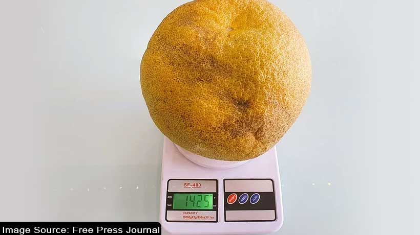 'hulk-of-an-orange':-largest-orange-by-circumference-found-in-nagpur
