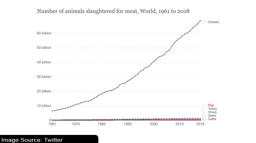 here-are-the-number-of-animals-slaughtered-for-meat-worldwide