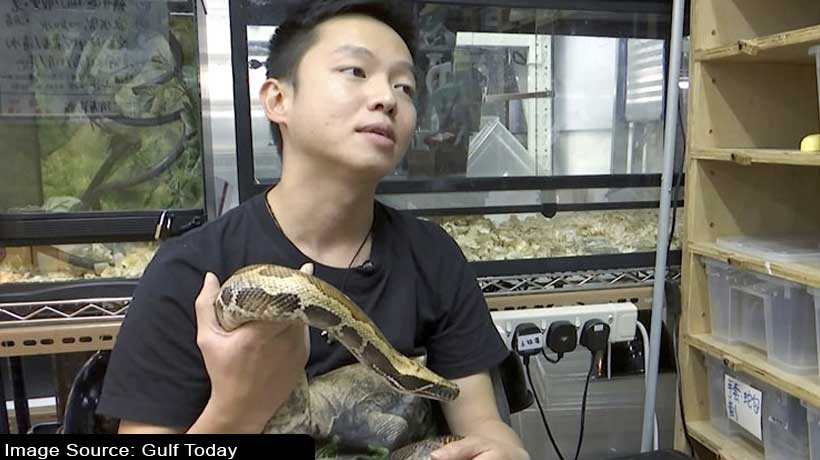 hong-kong's-youngest-snake-catcher-kim-lee-makes-an-impression