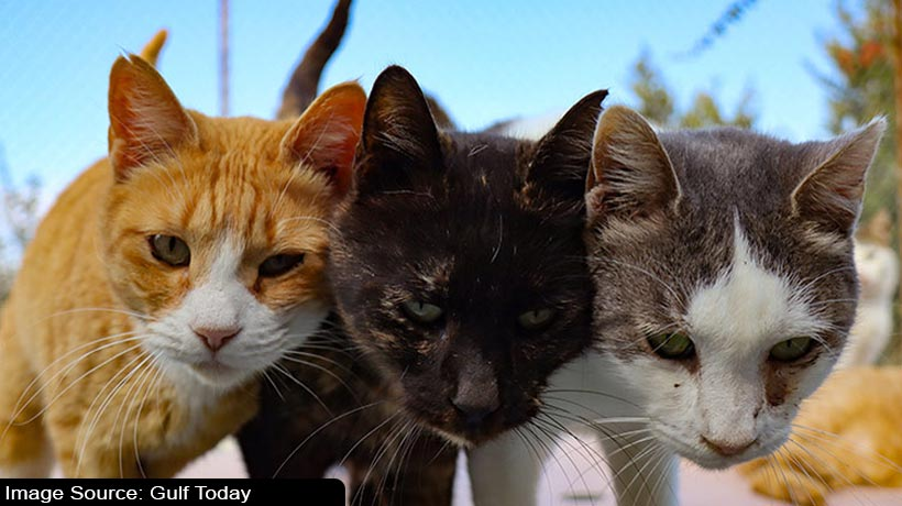 cyprus-cats-out-in-cold-as-covid-19-squeezes-the-economy
