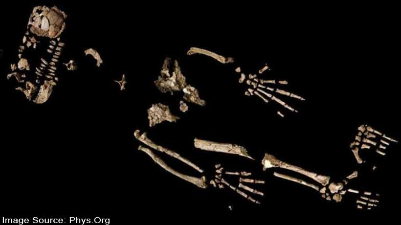 how-early-humans-began-to-walk-upright-reveals-4.4-mn-year-old-skeleton