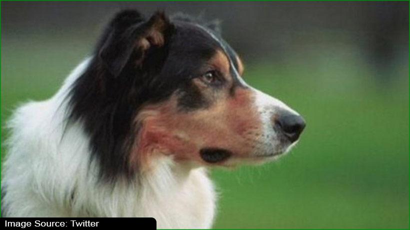 electric-shock-training-for-dogs-slammed-as-'inhumane'
