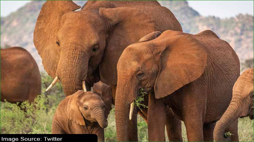 african-elephant-species-declared-'critically-endangered'
