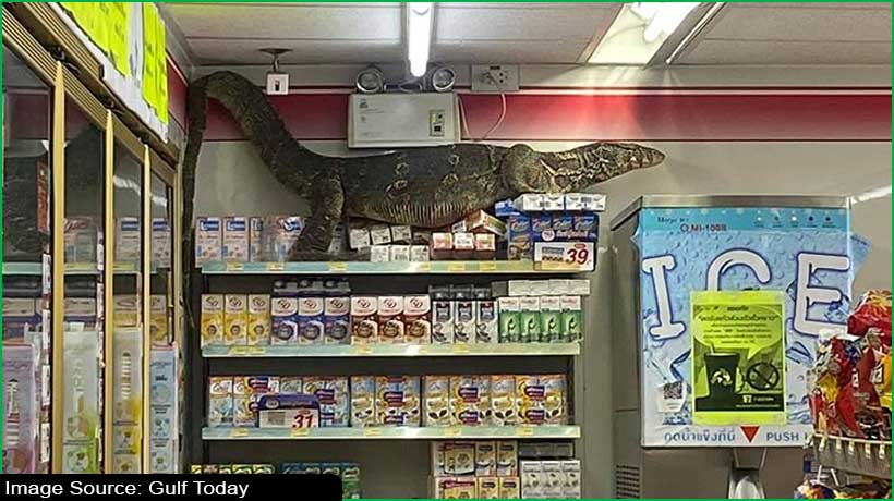 Giant lizard goes on rampage at Thailand store