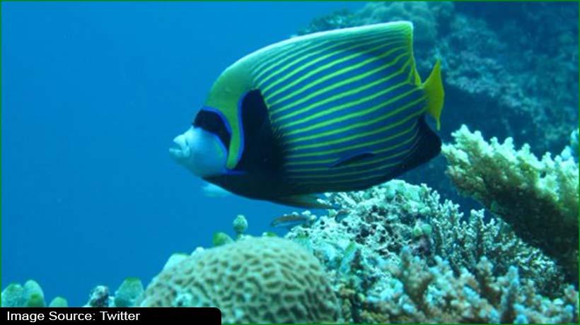Report: Climate change devastating marine life