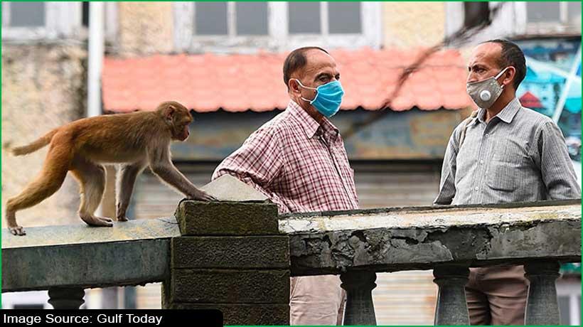 delhi-police-arrest-duo-for-using-monkeys-for-robbery