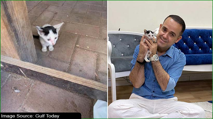 dubai-cat-lover-pleads-with-woman-to-return-kitten