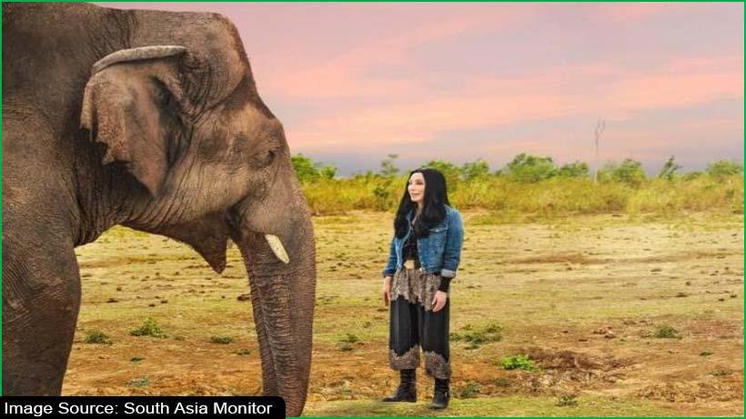 watch-the-journey-of-'world's-loneliest-elephant'-digitally