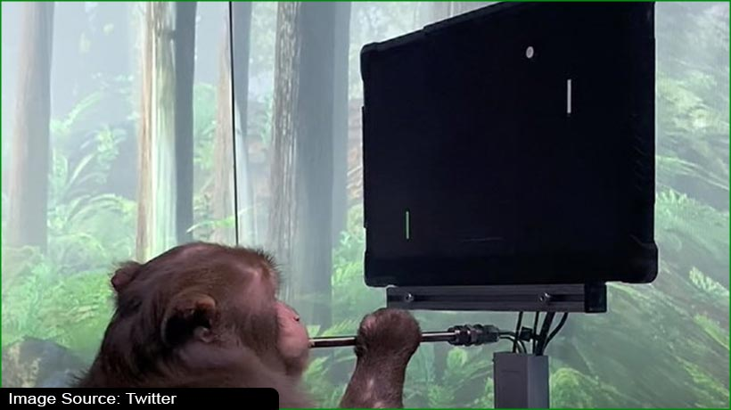 monkey-plays-pong-after-neuralink-implants-microchip-in-its-brain