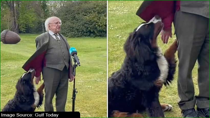 trending:-irish-president's-dog-nibbling-for-attention-goes-viral