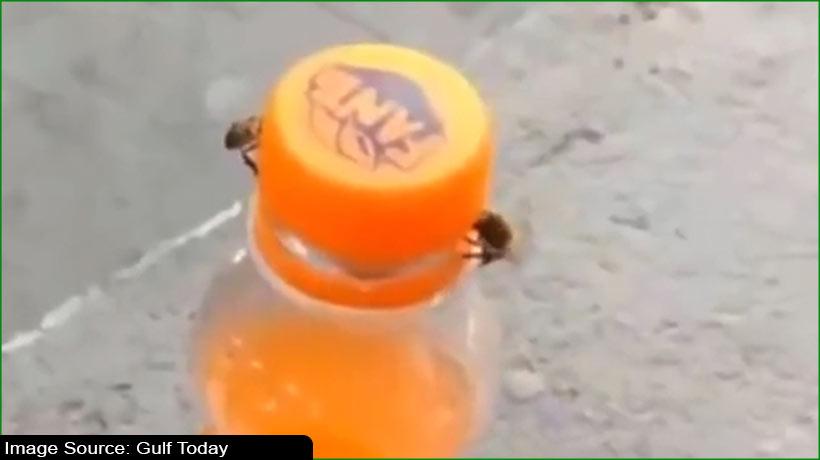 two-honeybees-open-fanta-bottle-video-goes-viral