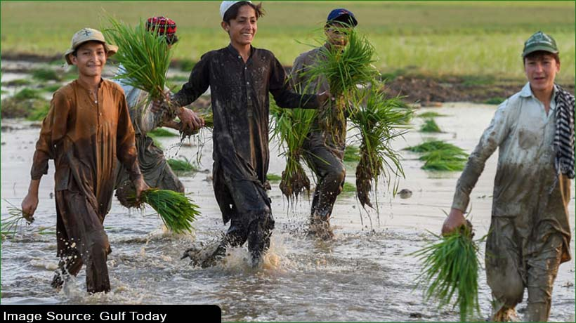 Plant a sapling and get 20 marks, says Pakistan government to universities