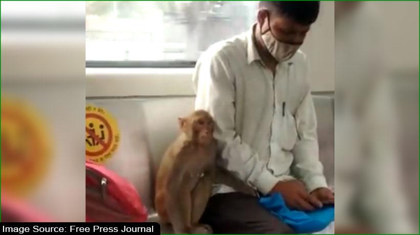 मेट्रो के अंदर घुसा बंदर और फिर...