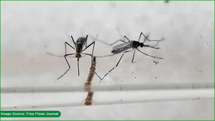 india's-kerala-confirms-first-case-of-zika-virus