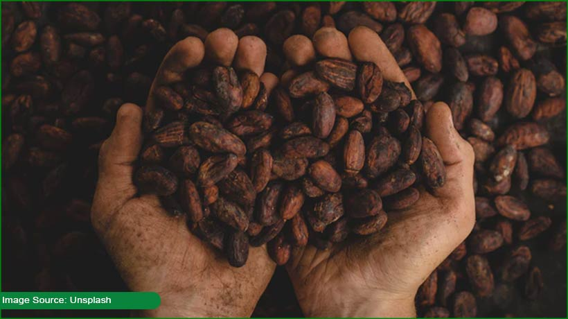 cocoa-bean's-'fingerprint'-can-help-in-tracing-chocolate's-origin