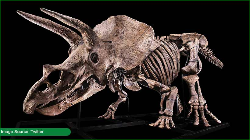 world's-biggest-triceratops-is-on-sale!