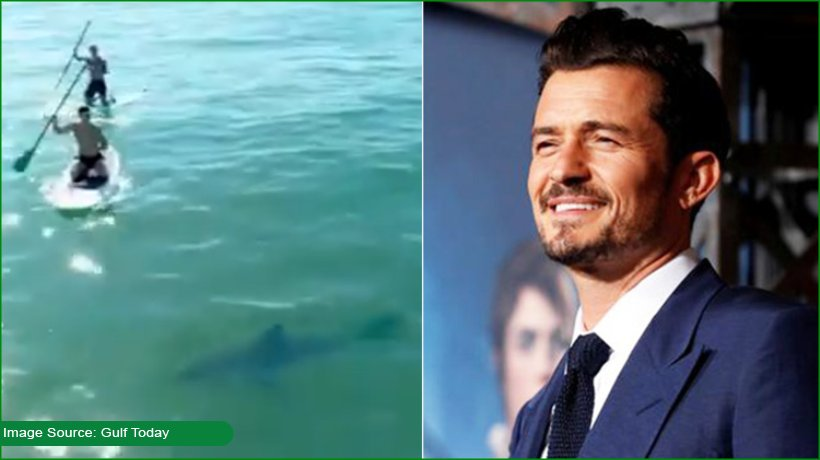 orlando-bloom-paddleboards-next-to-great-white-shark