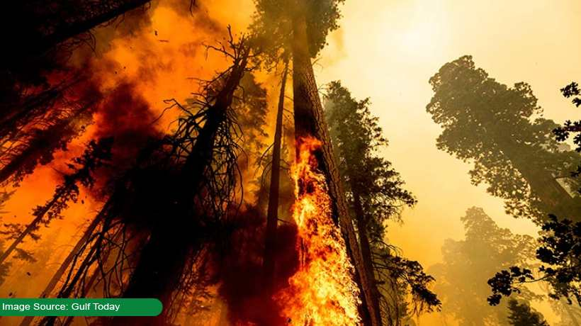 sequoias:-california-wildfires-elevate-danger-for-world's-largest-trees