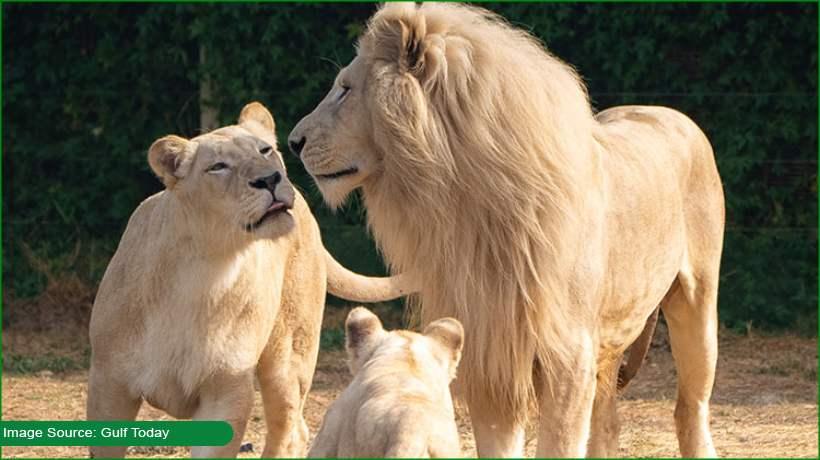 Dubai Safari Park set to open for visitors on 27 Sept