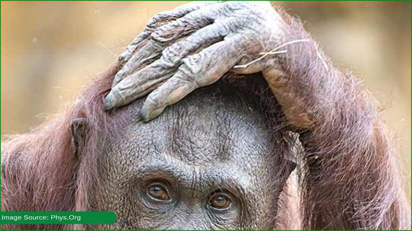 orangutan-dies-after-dental-surgery-at-zoo-miami