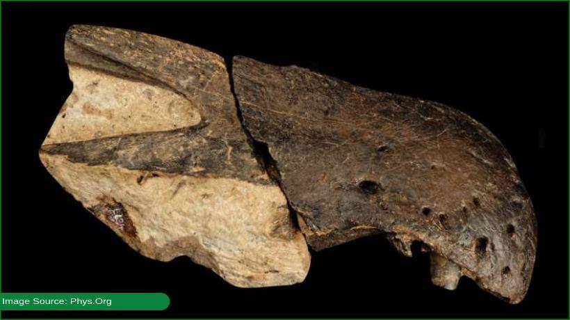2-new-species-of-giant-predatory-dinosaur-discovered