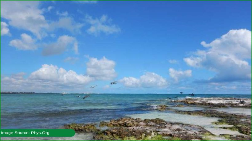 study-says-coral-microbiome-key-to-surviving-climate-change