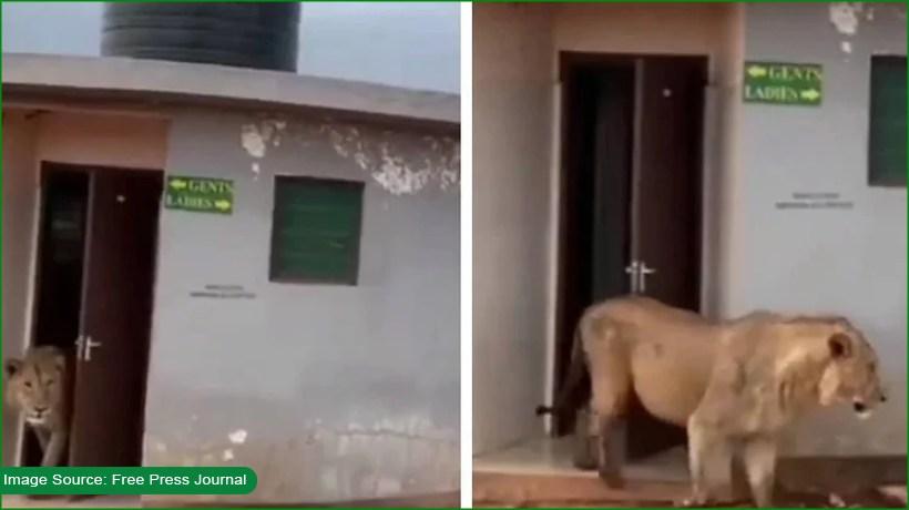 netizens-applaud-king-of-jungle-as-he-walks-out-of-public-toilet