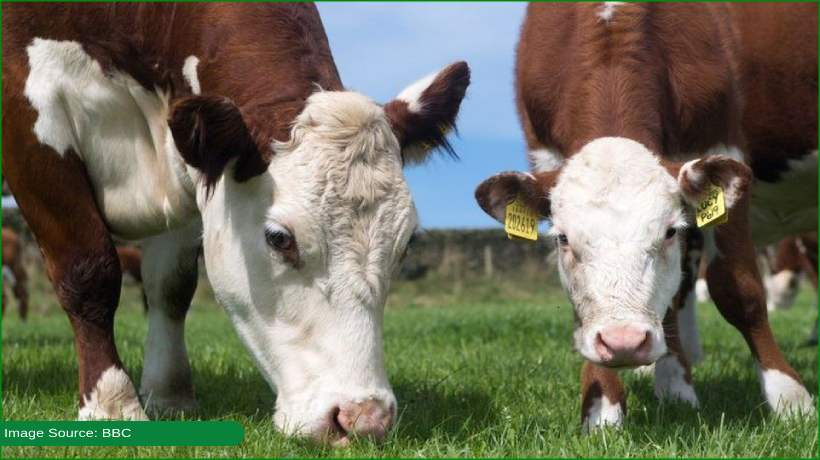 china-bans-british-beef-over-'mad-cow'-disease